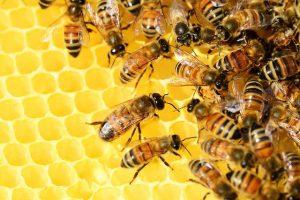 Produkty pszczele dla odzyskania zdrowia